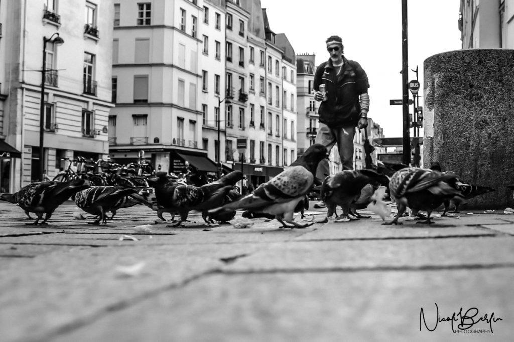 travel-paris-street-birds