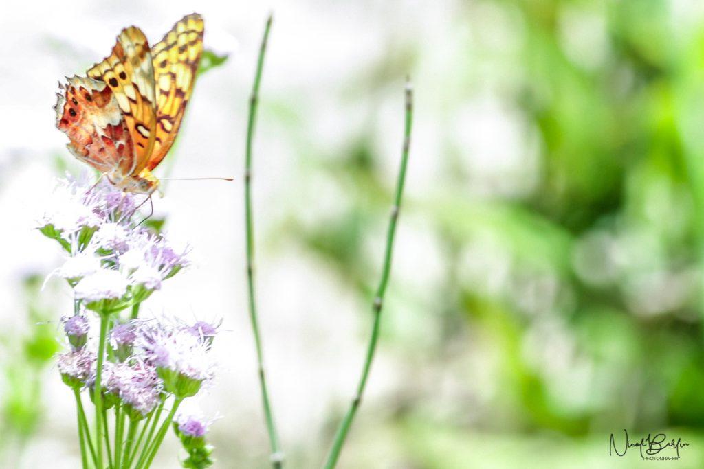 Butterfly on Flower at Lady Bird Johnson Wildflower Center